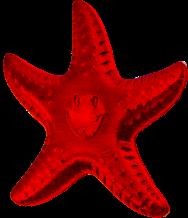 Jeweled Ruby 2